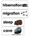 winter animals word wall