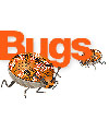 What's a Bug website