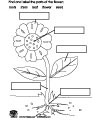 Parts of Plants Coloring Page http://fidget-group.co.uk/xu-plant-parts-coloring-page.shtml