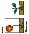 plants science activity