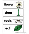 flower and plant word wall