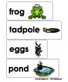 frog and pond word wall