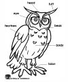 Owl Parts Coloring page
