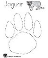 jaguar paw print tracing