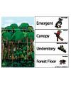Layers of rainforest activities and lesson