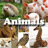 Animals preschool and kindergarten themes