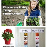 Preschool Kindergarten Flowers Living Things Science