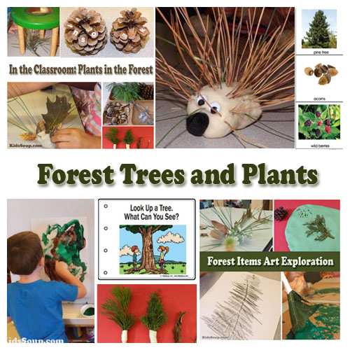 Forest Trees and Plants preschool activities, lessons, and crafts