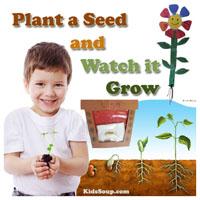 Preschool Kindergarten Plant a Seed Theme
