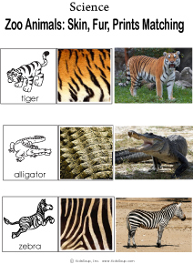 Zoo Animal Prints Science Activity and Game for Kindergarten