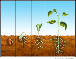 From Seed To Plant Activities Kidssoup