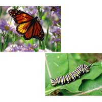 Caterpillar and Butterfly Science Lesson for kindergarten