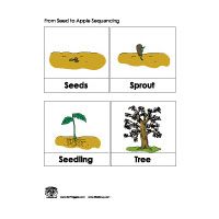 Apple Life Cycle Sequencing on Kindergarten Planting Seeds Worksheets
