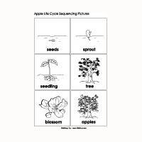 Apple Life Cycle Sequencing | KidsSoup