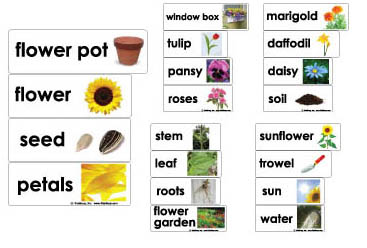 Flowergardenwordwallks on kindergarten story sequencing