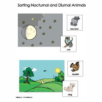 Nocturnal Animals Activities, Games, and Printables