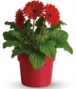 Flowers Are Living Things Science Activity Kidssoup