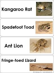 Desert animals word wall cards and activities for preschool