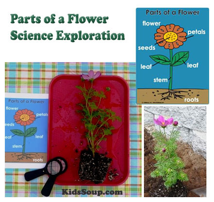 Parts Of A Flower Science Exploration For Preschool And Kindergarten on Letter I Craft Ideas