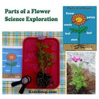 Preschool Kindergarten Parts of a Flower Science Lesson