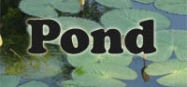 Pond life preschool and kindergarten themes