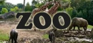 Zoo theme preschool and kindergarten