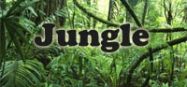 Jungle animals preschool and kindergarten themes