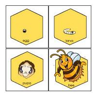 worksheet: Honey Bee Life Cycle Worksheets Teaching About Pumpkins ...