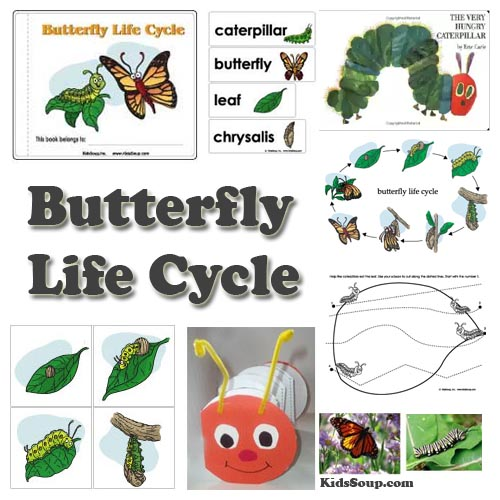 Preschool butterfly and caterpillar life cycle science lesson and activities