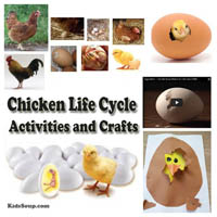 Preschool Kindergarten Chicken Life Cycle Science Activities