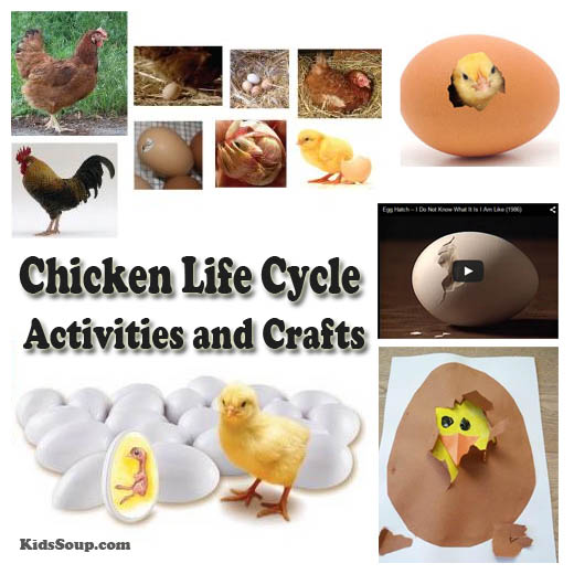 Chicken Life Cycle Activities and Crafts – Chicken Life Cycle Worksheet