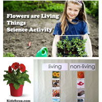 Preschool Kindergarten Flowers Living Things Science