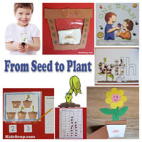 Preschool Kindergarten Seed to Plant Activities and Lessons