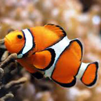 Nemo clown fish science activity preschool