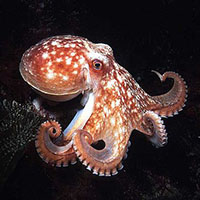 Hank the friendly octopus  science facts and pictures