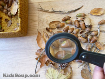 Squirrels and fall science activity