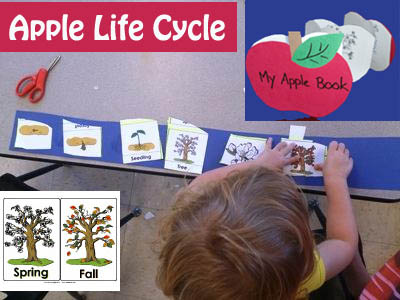 Apple life cycle science lesson and activities for preschool and kindergarten