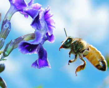 bee science activities for preschool and kindergarten