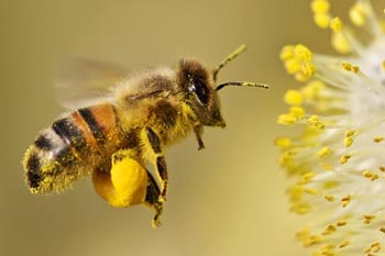 Preschool bees and pollination science lesson and activity