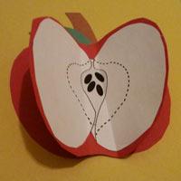 Parts of an apple preschool kindergarten craft