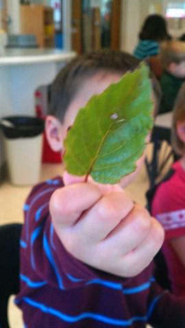 Leaves and fall preschool lesson and activities