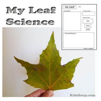 Preschool Kindergarten My Leaf Science Activity and Printable