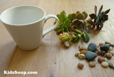 Mother's Day succulents gift idea preschool