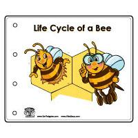 Preschool Bee Life Cycle Booklet, Lesson, and Printables