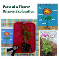 Preschool Kindergarten Parts of a Flower Science Lesson