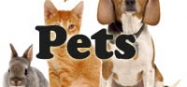 Pets, dog and cats preschool and kindergarten themes